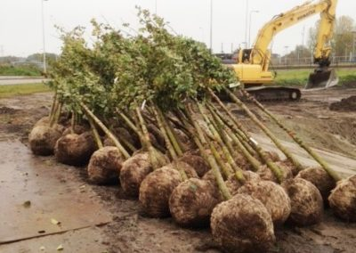 Bomen planten in Amsterdam